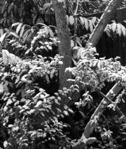 <untitled>SNOW at 125 &copy; John Batten Photography