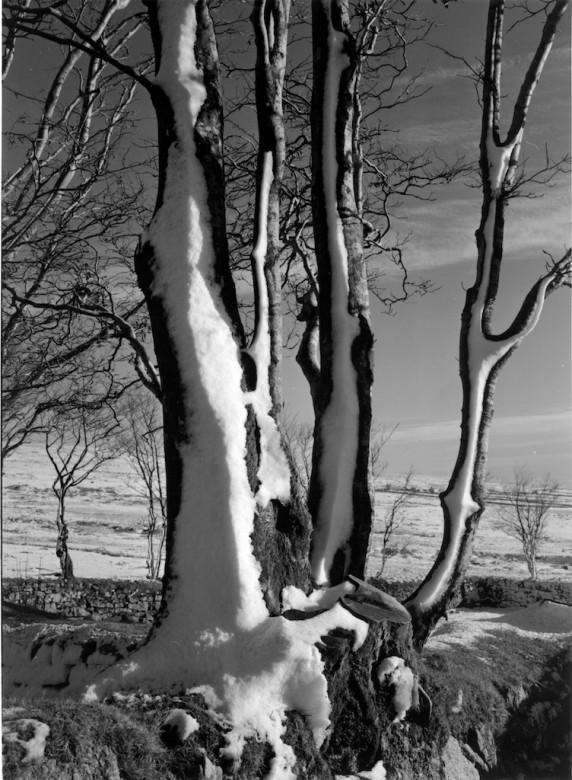 <untitled>YELLOWMEADE FARM &copy; John Batten Photography